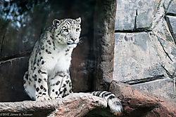 Zoo-2019-0049.jpg