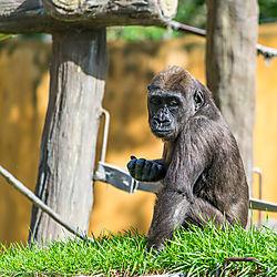 Zoo-2019-0073.jpg