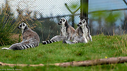 Zoo-2019-0107.jpg