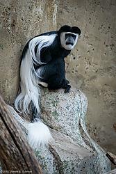 Zoo-2019-0133.jpg