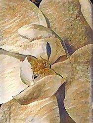 a_summers_magnolia.jpg