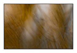 abstract1.jpg