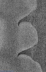 agave_details_4a_bw.jpg