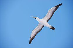 albatross_photo.JPG