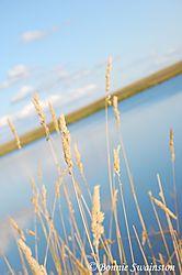 angled_grass_and_sky1.jpg