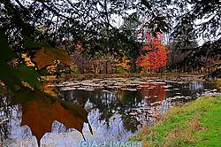 autumn_reflections1.jpg