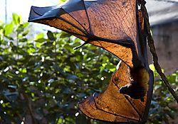 bat_3_9838_web2.jpg