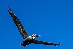 beach_bird_in_the_air.jpg