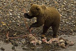 bear0115pwrpt.jpg