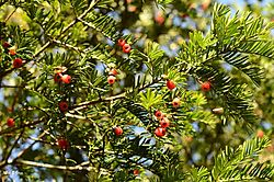 berries_n.jpg