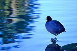 bird8_edited.jpg