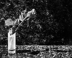 black-rose-glass-impressionist_-fine-art.jpg