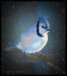 blue_jay_300_lens_window_chiacuroso_sno_degas_DSC0522.jpg