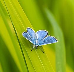 blue_tit-0675.jpg
