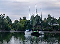 boats-0817-NIK.jpg