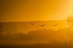 bosque_sunset.jpg