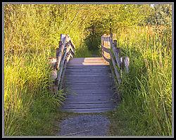 bridge29.jpg