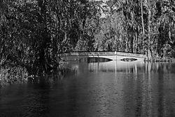 bridge37.jpg