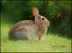 bunny_P1000871.jpg