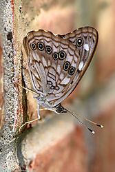 butterfly311.jpg