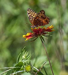 butterfly_1_of_1_1.jpg