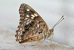 butterfly_1edit.jpg