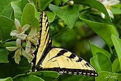 butterfly_stripes.jpg