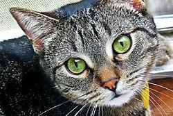 cat303_crop6x4.jpg