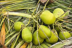 coconuts_as_Smart_Object-1.jpg