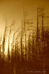 corn_stalks_10-19-14_17.JPG