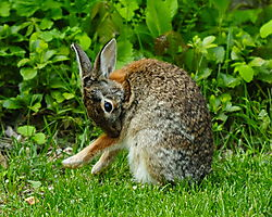 delany-20090513-193957-bunny_rabbit.jpg