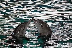dolphin-love.jpg
