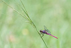 dragonfly37.jpg