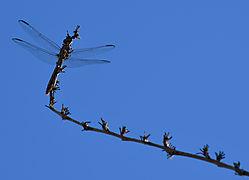 dragonfly39.jpg
