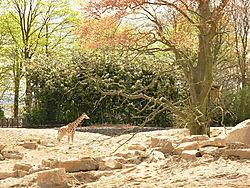 dublin_zoo_226.JPG