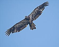 eagle0706201972.jpg