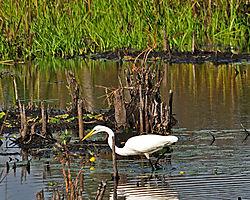 egrets_4096_copy_crop.jpg