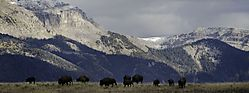 email_Autumn_foliage_and_Bison-19807.jpg