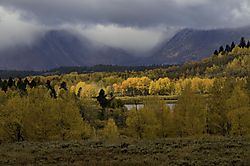 email_Grand_Tetons_fall_foliage_CA19314_1_of_1_.jpg