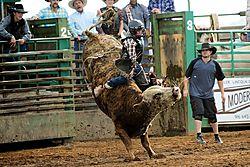 email_Rodeo_5_Bull_riding_DSC_1075_1_of_1_.jpg