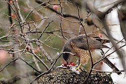falcon_054_copy.jpg
