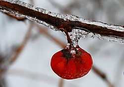 flashfrozenfruit.jpg