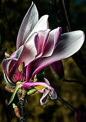 flower410.jpg