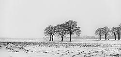 foto-sneeuw-winter9.jpg