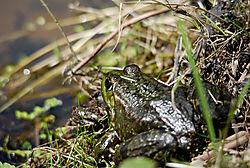 frog-12.jpg