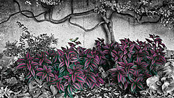 garden_study1.jpg