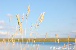 grass_and_sky1.jpg