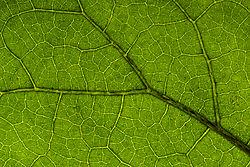 green_net.jpg