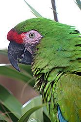 greenparrotgood.jpg
