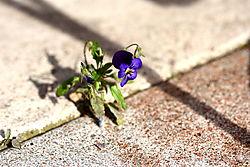 haus-terrasse_blume_20-09_0971.jpg
